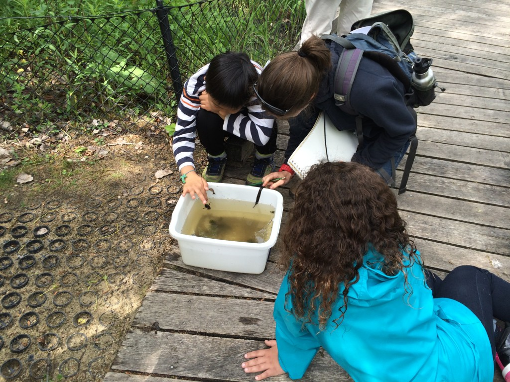 two students examine polliwogs outdoors with a STEM mentor