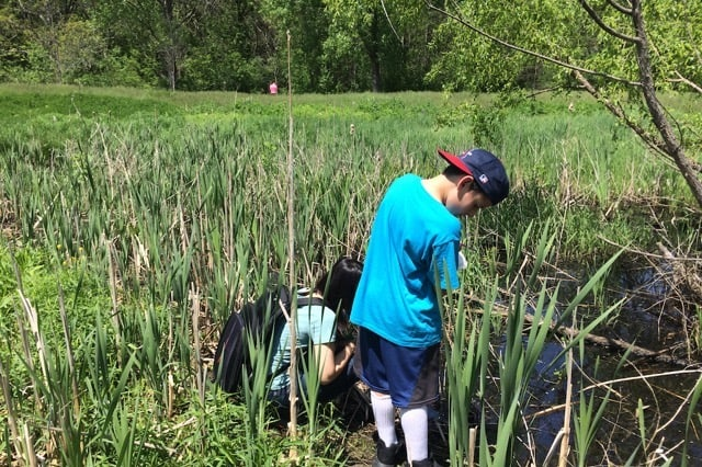 child exploring reeds and wet meadow with an adult nearby